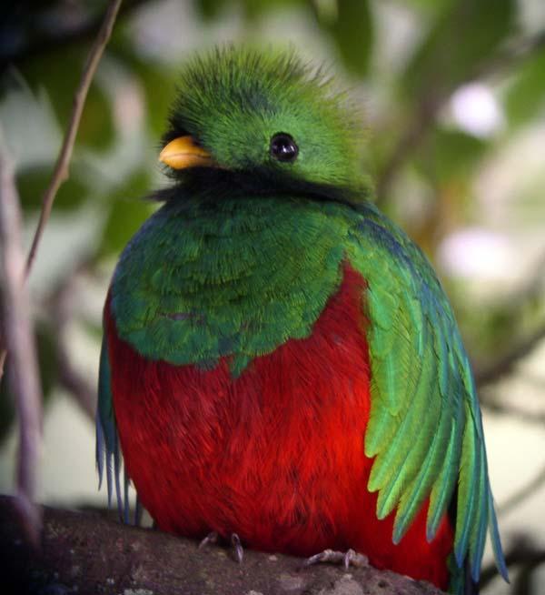 ¿Insignias de los clanes? Quetzal
