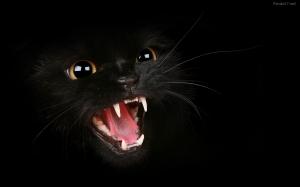 un-gato-negro-2069